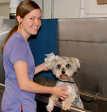 Brambleton Veterinary Hospital Bathing & Grooming